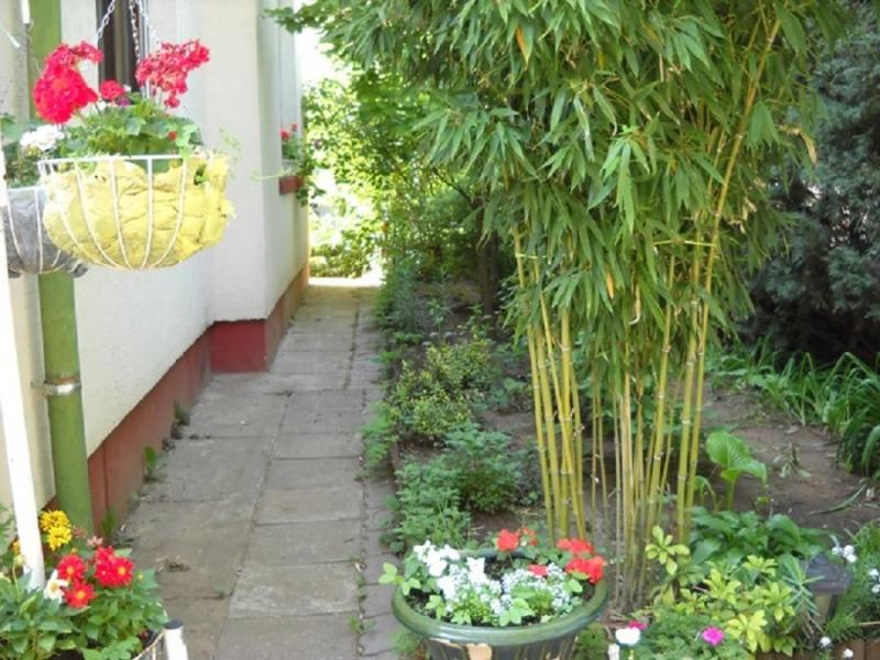 Dành một góc nhỏ để trồng cây xanh tạo sự mát mẻ cho nhà trọ