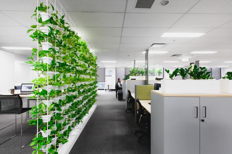 Hiệu quả công việc được tăng lên rất nhiều trong phòng làm việc có nhiều cây xanh