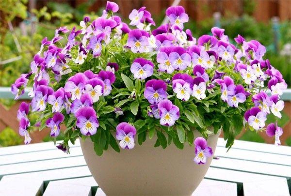 Trồng và chăm sóc hoa, cây cảnh