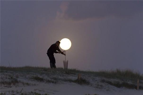 Cây trăng đã lớn- Nguồn: Internet
