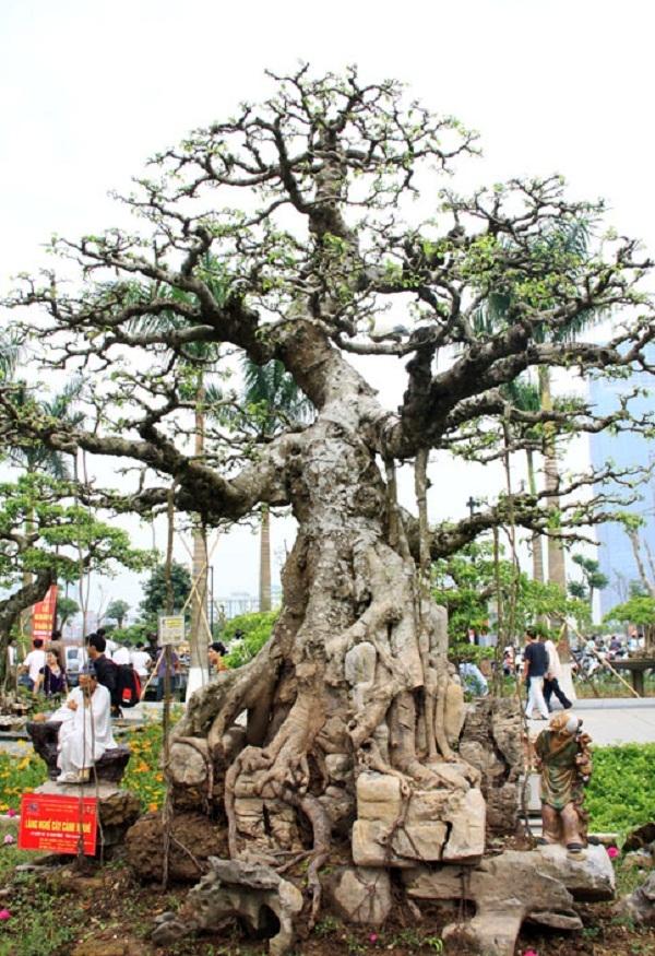 Top 10 loại cây cảnh quý hiếm giá tiền tỷ ở Việt Nam