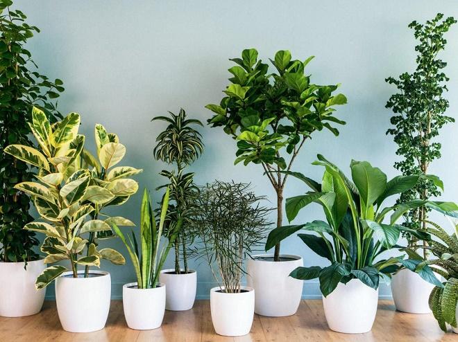 Trung tâm cây giống Sài Gòn