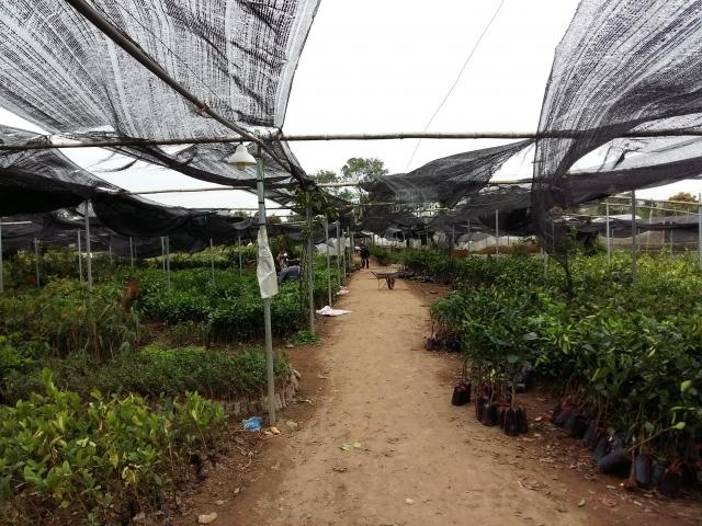 Khu vườn ươm rất rộng của Trung tâm giống cây nông nghiệp - Đại học nông nghiệp 1