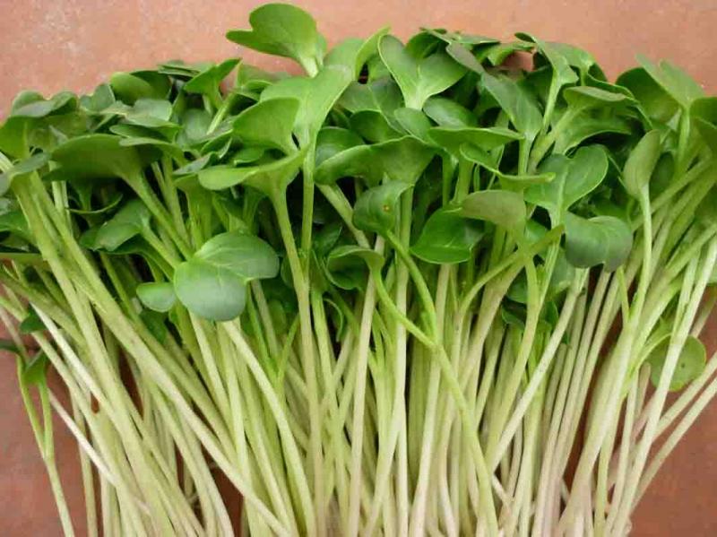 Giống rau mầm củ cải trắng.