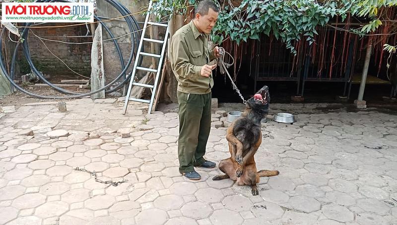 Trung tâm huấn luyện chó Hoàng Gia