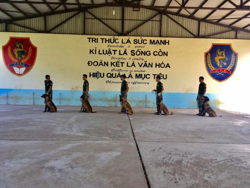 Trung tâm huấn luyện chó nghiệp vụ PDS - Việt Nam
