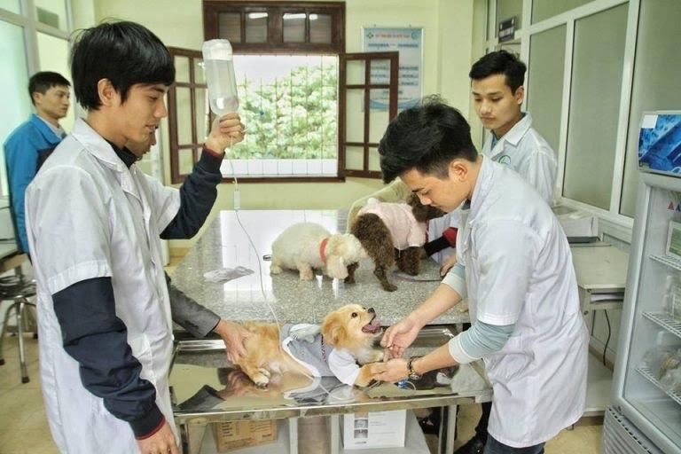 Sinh viên ngành thú y trong giờ thực hành