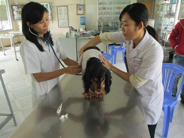 Học viên nông nghiệp Việt Nam là đơn vị đi đầu trong lĩnh vực đào tạo các ngành chăn nuôi, thú y.