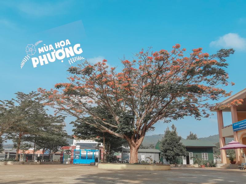Trường Tiểu học Mê Linh