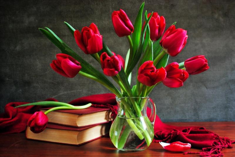 Tulip đỏ