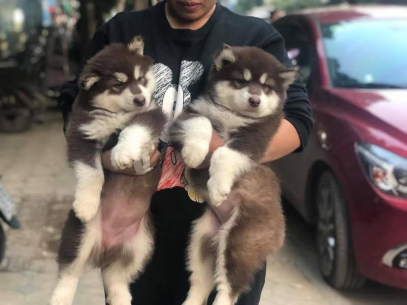 Tùng Lộc Pet