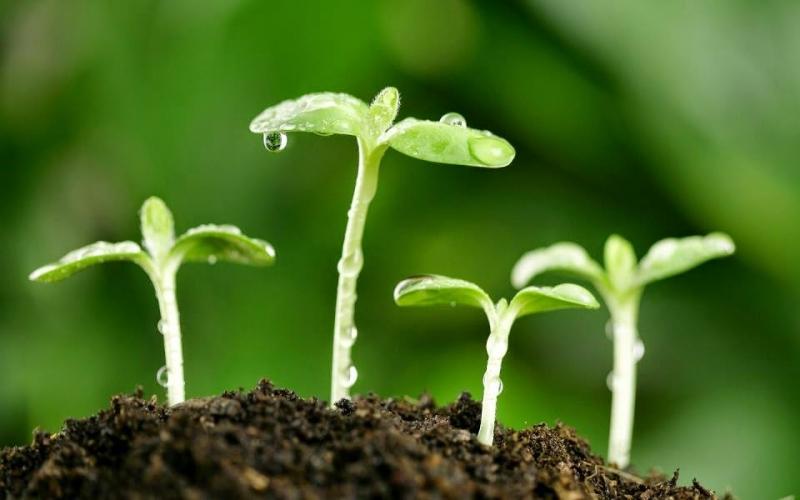 Cùng với sự phát triển của hạt giống, may mắn đến với người tuổi Dậu cũng dần tăng