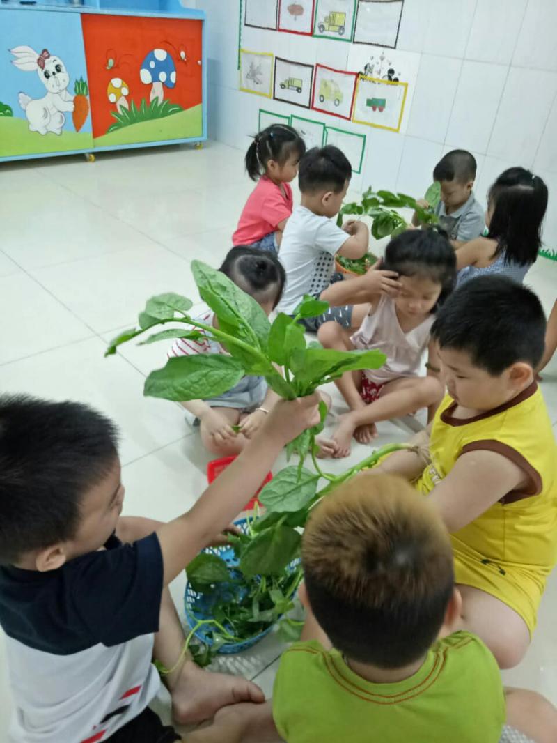 Trường mầm non tư thục Song Mai được thành lập với mục tiêu giúp các bé lứa tuổi mầm non sẽ được chăm sóc để phát triển toàn diện cả về thể chất, trí tuệ và tâm hồn