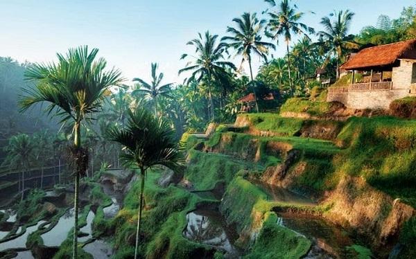 Ruộng bậc thang ở Ubud