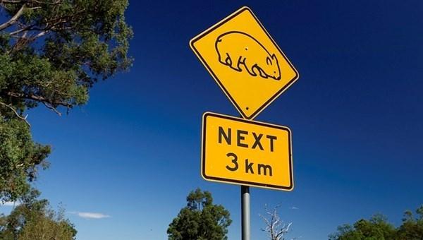 Tỉ lệ xe ô tô ở Úc hiện tại khoảng 556 xe trên 1000 người