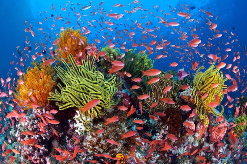 Đến với Úc không thể không khám phá rạn san hô Great Barrier, đây là hệ thống ngầm đá san hô lớn nhất thế giới, và đương nhiên vẻ đẹp của nó khó có thể cưỡng lại được.