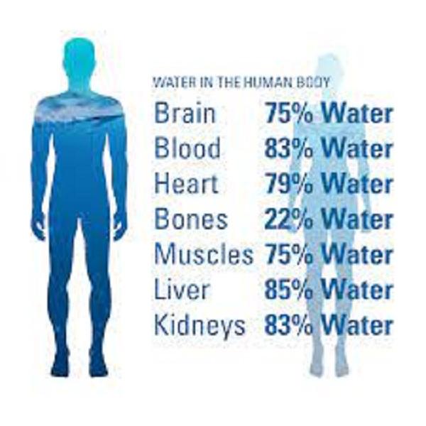 Tỉ lệ nước ở các phần trên cơ thể