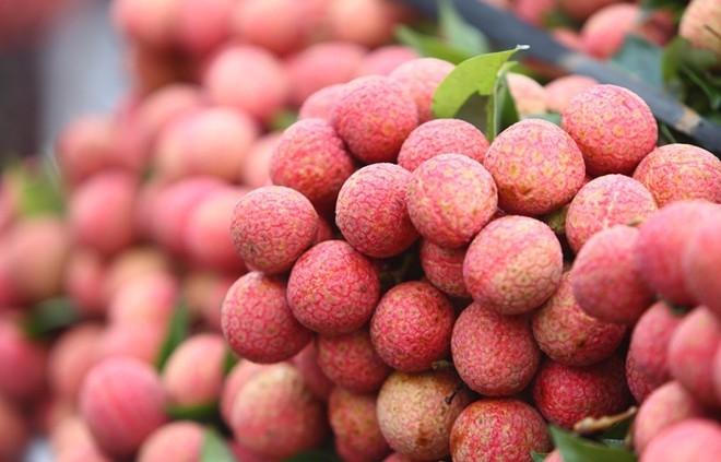Vải thiều Lục Ngạn chín vỏ mỏng đỏ, cùi dày, rất thơm và ngọt