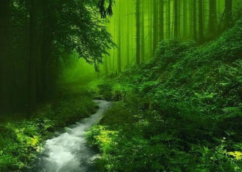 Kì diệu rừng xanh
