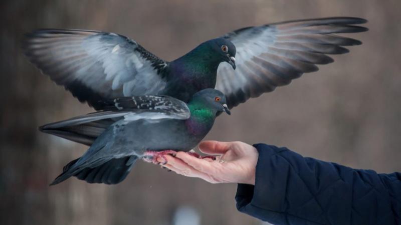 Venice (Italy) - Đừng bao giờ cho chim bồ câu ăn