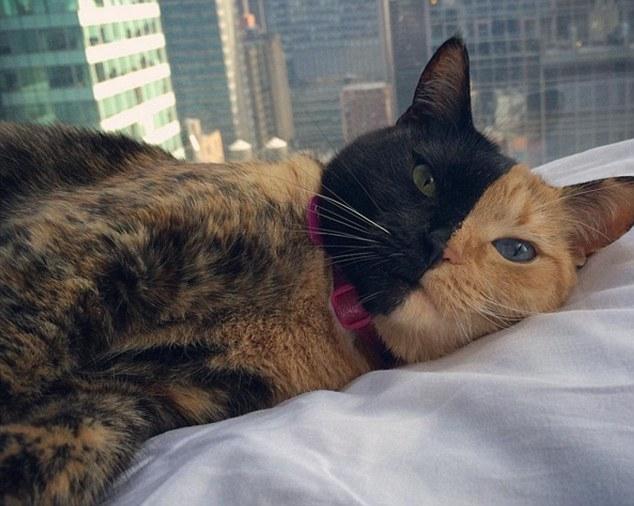 Cô mèo mang khuôn mặt lạ, độc đáo