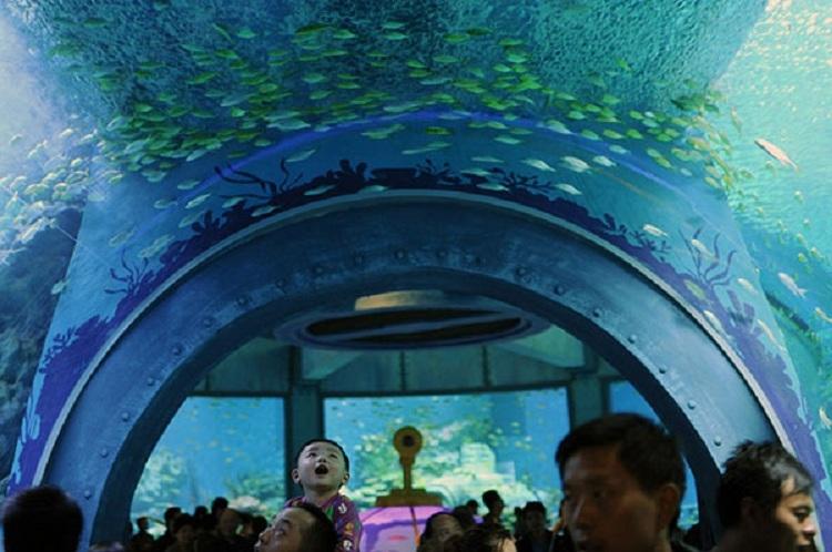 Tham quan Viện Hải Dương Học Nha Trang
