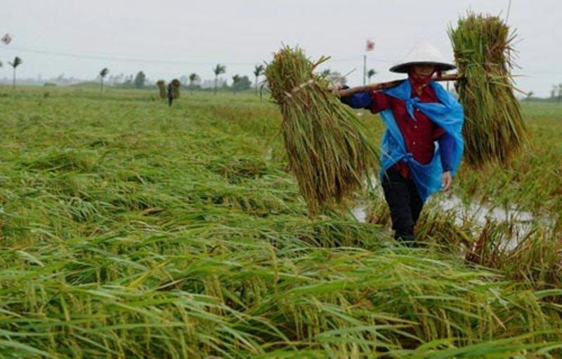 Việt Nam đi lên từ cây lúa