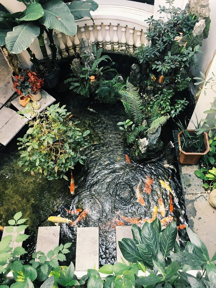 Nếu đến vào ban ngày bạn có thể ngắm hồ cá Koi Nhật độc đáo