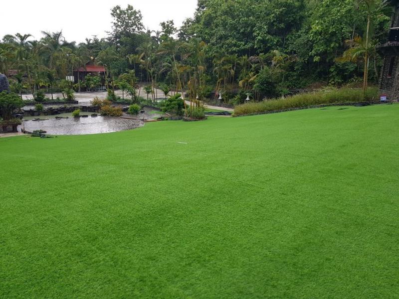 VINA Grass