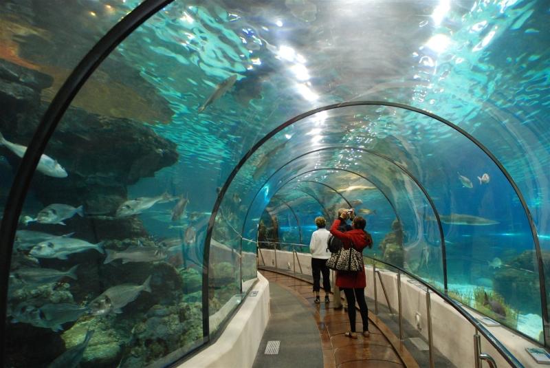 Đường hầm thủy cung dài 90m vô cùng độc đáo của Vinpearl Aquarium Times City