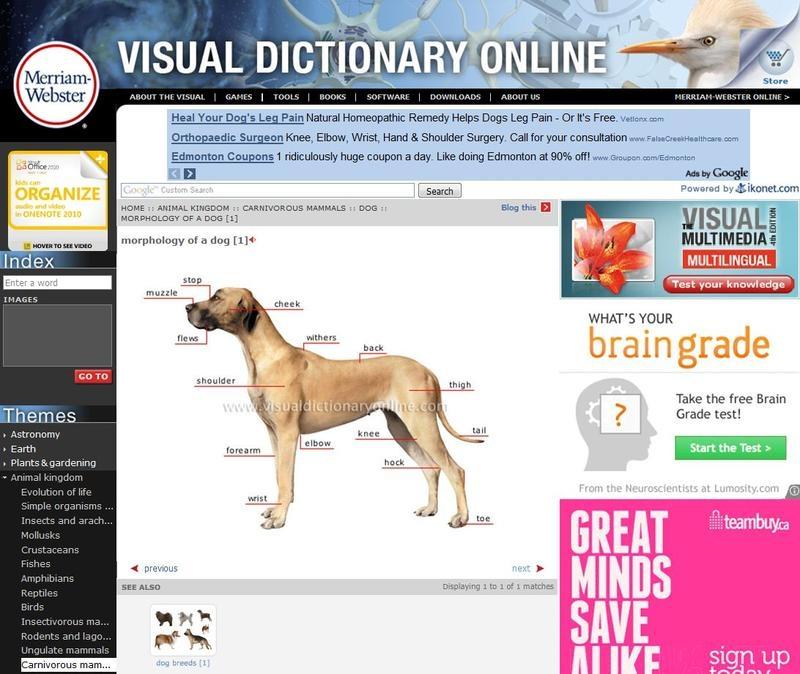 Trải nghiệm hình ảnh sinh động với từ điển Visual Merriam-webster