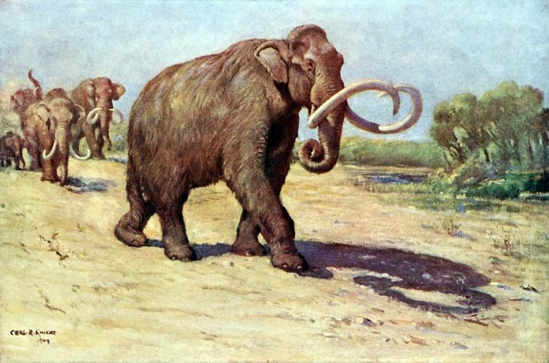 Một trong những động vật có vú khổng lồ nhất hành tinh, họ hàng gần với voi Ma - Mút.