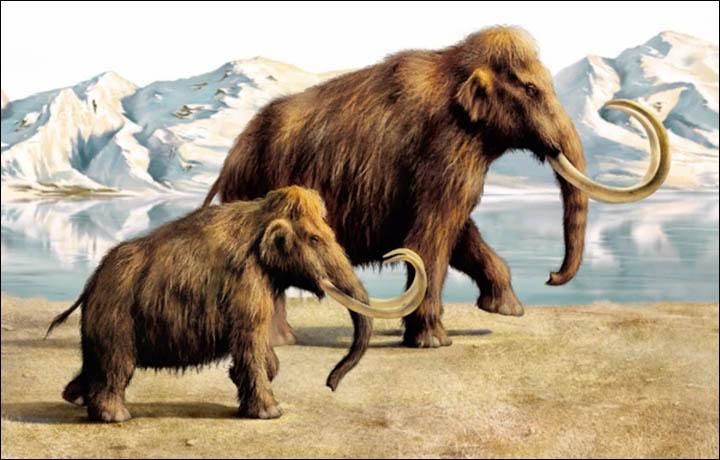 Có chiều cao 3,6 - 4,2 m và cân nặng từ 5,5 - 11 tấn.