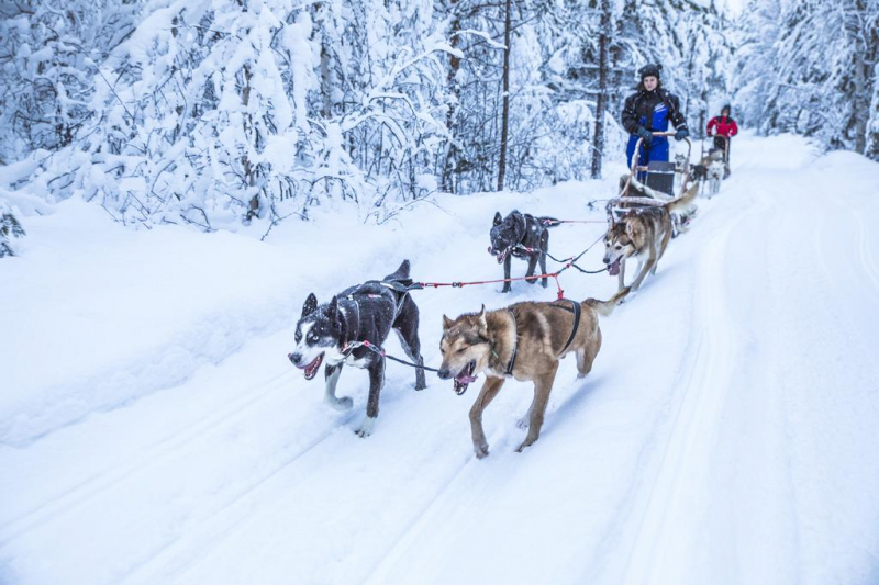 Mùa đông tại Laponia