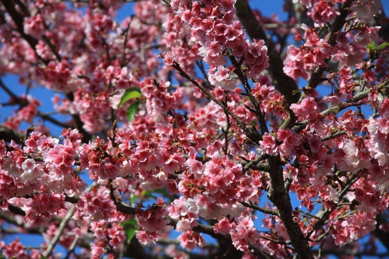 Mùa hoa nở rộ