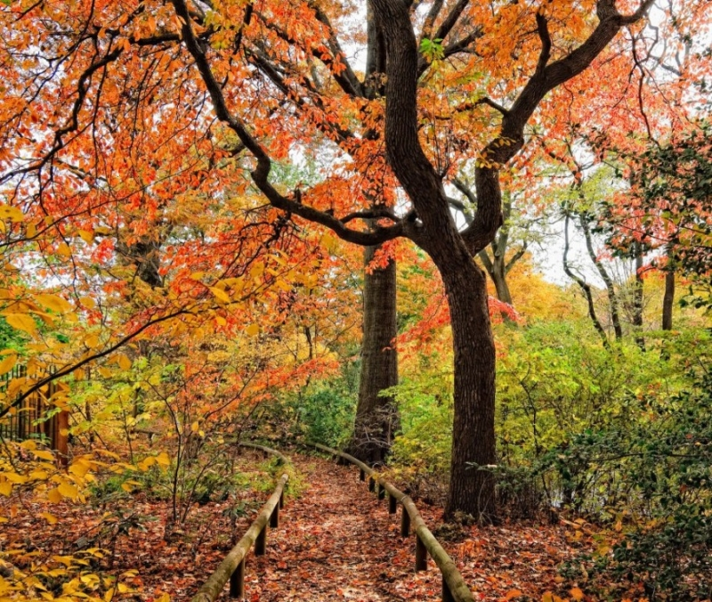 Vườn bách thảo Brooklyn