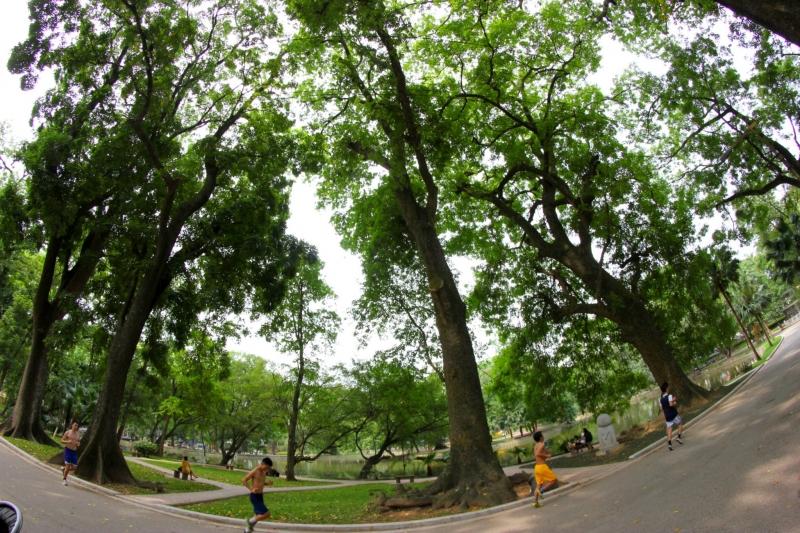 Những cây cổ thụ lâu năm ở Công viên Bách Thảo