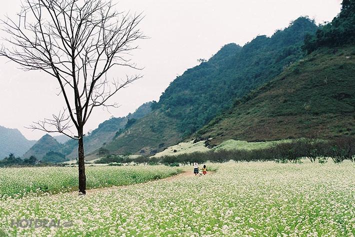Vườn cải Ba Phách