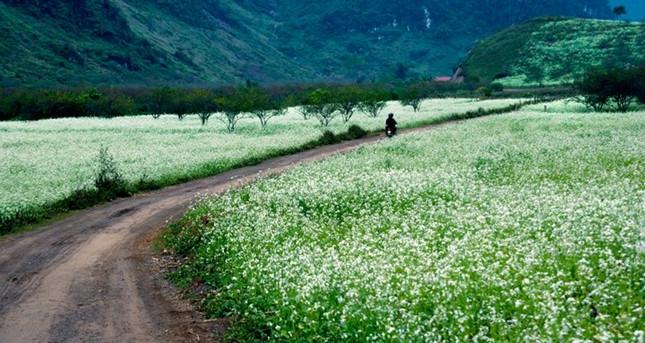 Vườn cải Pa Phách