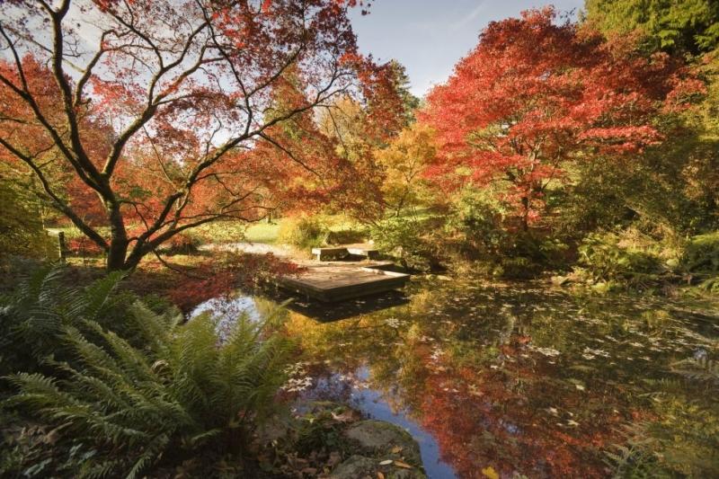 Vườn cây gỗ công viên Washington