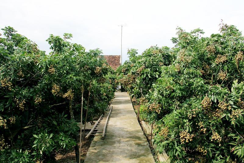 Vườn cây trái xanh tươi