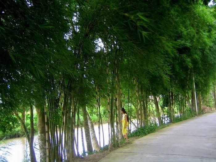 Con đường làng rợp bóng cây, những tán tre xanh phấp phới theo gió.