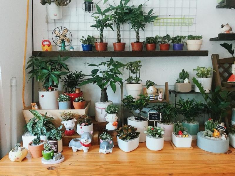 Top 5 shop bán cây cảnh đẹp nhất trên Instagram