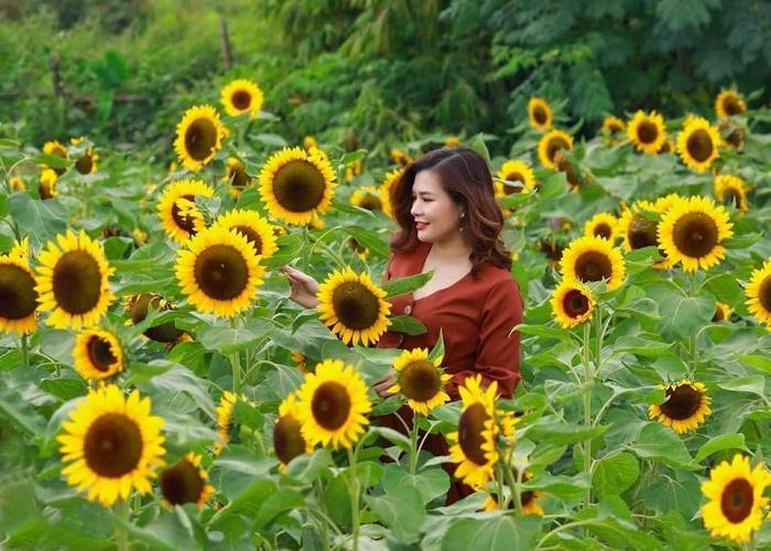 Vườn hoa hướng dương VSIP