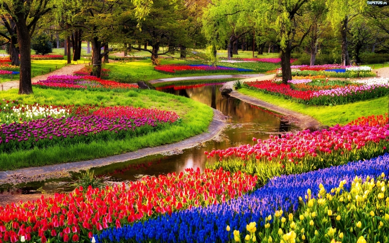 Vườn hoa Keukenhof, Hà Lan