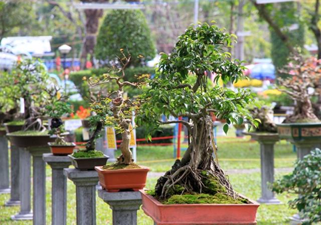 Cây kiểng được trồng công phu