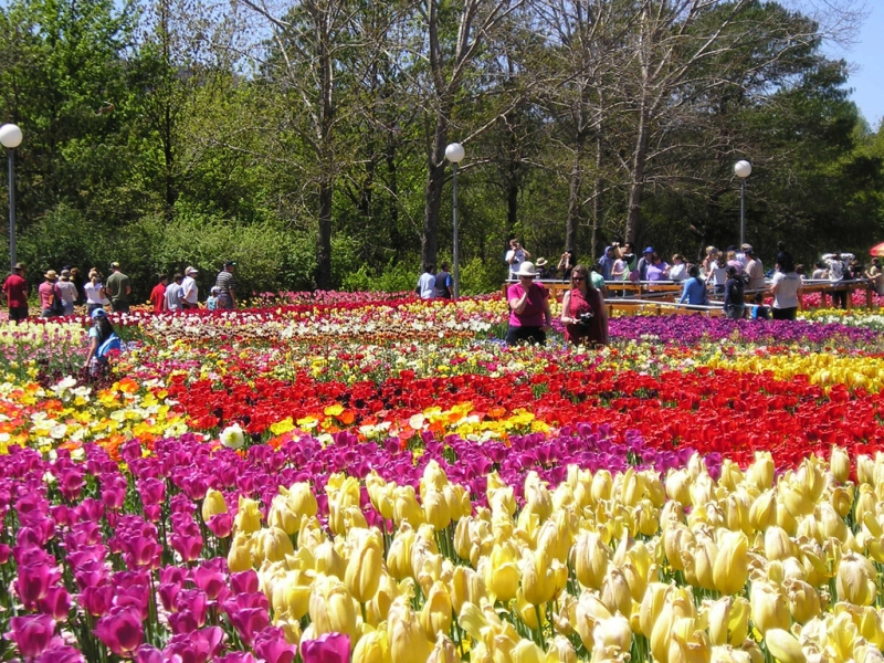 Hàng trăm loại hoa với màu sắc rực rỡ