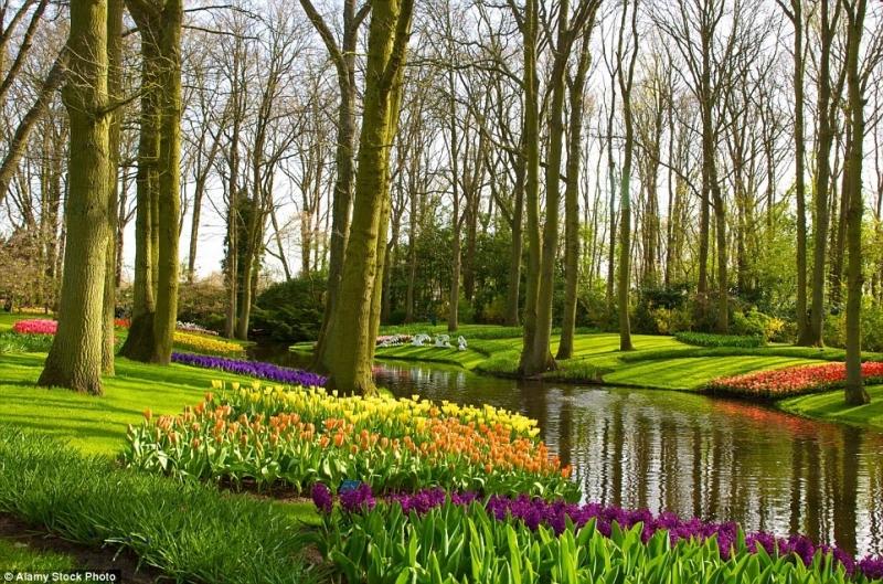 Vườn Keukenhof