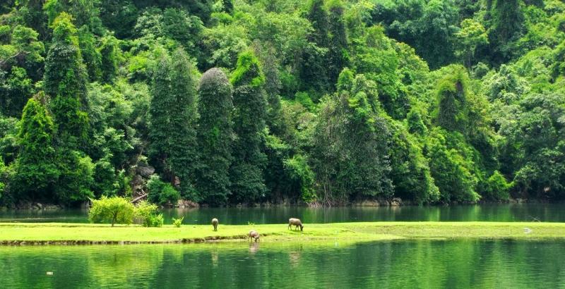 Vườn quốc gia Ba Bể (Bắc Cạn)