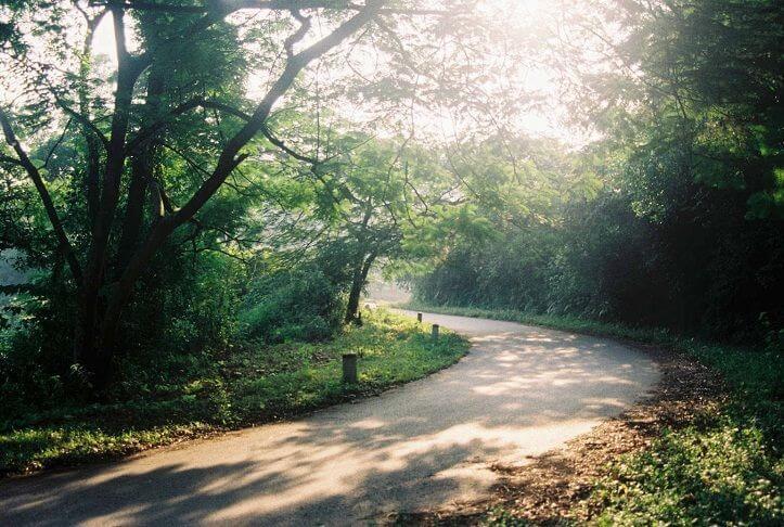 Một đoạn đường xanh mát trong vườn quốc gia Ba Vì